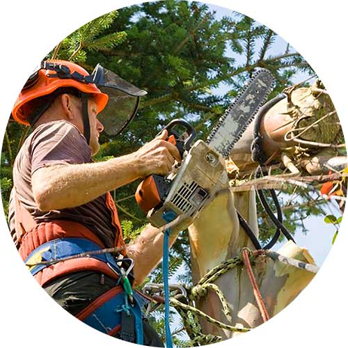 Recinos Professional Tree Care