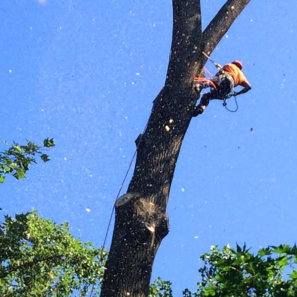 Recinos Tree Service and Landscaping